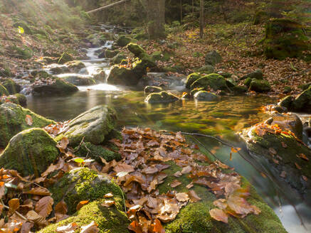Germany, Bavaria, Stream in Bavarian Forest during autumn - HUSF00109