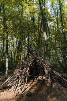 Refuge made of branches in a beech forest - GEMF03296