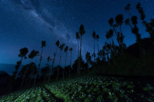 Indonesia, East Java, Silhouettes of trees standing against Milky Way galaxy on starry night sky - TOVF00132