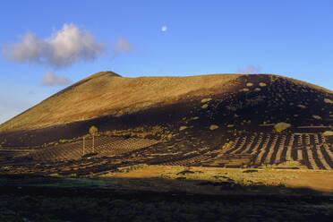 Weinkulturen am Montana Diama, bei Yaiza, Region La Geria, Lanzarote, Kanaren, Spanien - SIEF09295