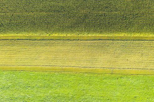 Maisfeld und Wiesen, bei Egling, Luftbild, Oberbayern, Bayern, Deutschland - SIEF09310