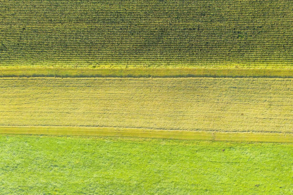 Germany, Bavaria, Upper Bavaria, Aerial view of green fields - SIEF09310 - Martin Siepmann/Westend61