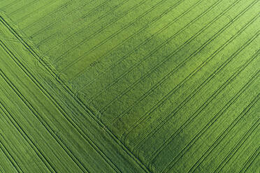 Germany, Bavaria, Aerial view of green countryside field covered in pattern of tire tracks - RUEF02360
