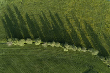Germany, Bavaria, Aerial view of row of trees growing in green countryside meadow - RUEF02375