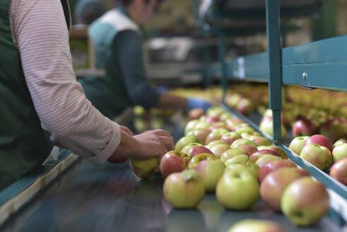 Female workers checking apples on conveyor belt in apple-juice factory - LYF00985