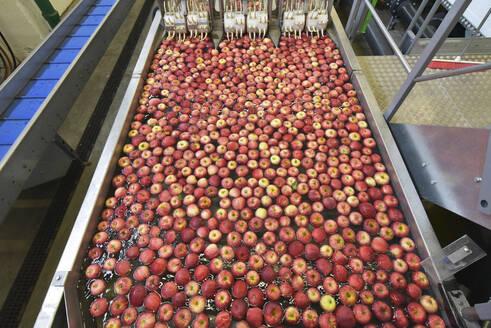 Conveyor belt with apples in water - LYF00994