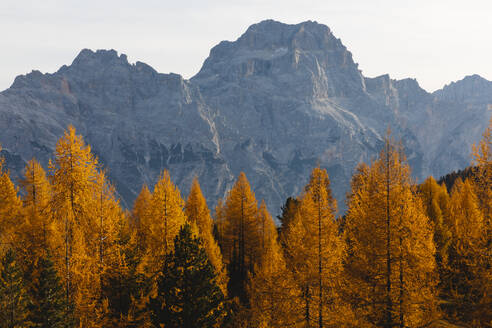 Autumn mountain landscape at the morning light, Dolomites, Cortina, Italy - MRAF00447