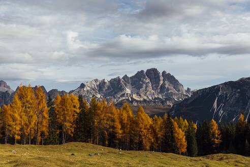 Autumn mountain landscape at the morning light, Dolomites, Cortina, Italy - MRAF00453