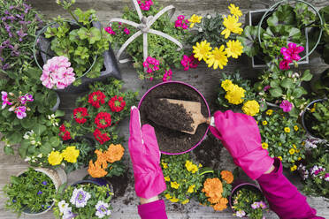 Hands of woman planting large variety of summer flowers - GWF06297