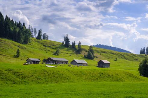 Almen, Alpen, Lecknertal, Oberallgäu, Allgäu, Bregenzer Wald, Vorarlberg, Schwaben, Deutschland - LBF02797