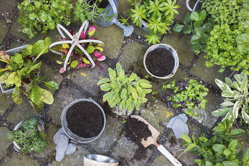 Planting of various green culinary herbs - GWF06309