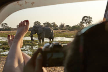 Woman with feet out of the car window taking a picture from an elephant, Khwai, Botswana - VEGF00862