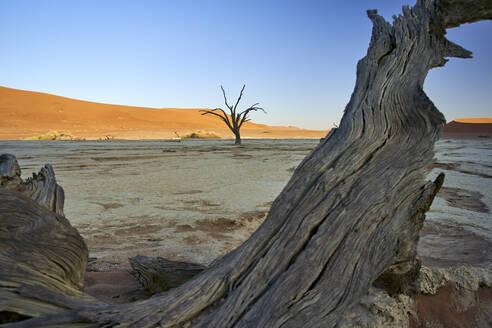 Dead trees in Deadvlei at sunrise, Sossusvlei, Namib desert, Namibia - VEGF00921