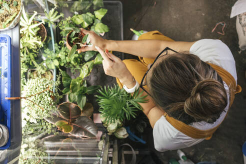 Top view of young woman caring for plants in a gardening shop - VPIF01831