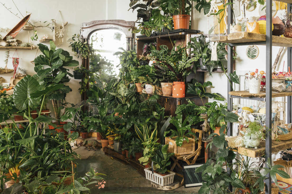 Assortment of plants in a showroom - VPIF01894 - Vasily Pindyurin/Westend61