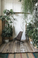 Wooden chair and plants in winter garden - VPIF01897