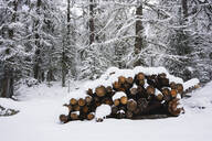 Wood covered by snow, Engadin, Switzerland - MRAF00455