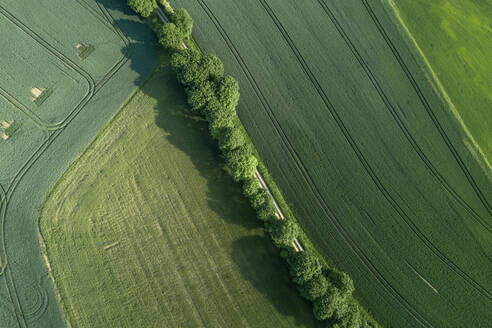 Germany, Thuringia, Aerial view of treelined road stretching between vast countryside fields - RUEF02394