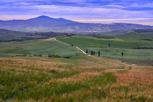 Italy, Tuscany, Orcia Valley, Pienza, Fields and hills at sunset - LOMF00947