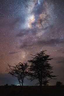 Trees with cloudy night and with the milky way - CAVF69457