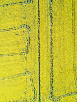 Aerial view of agricultural field at countryside, Girona, Spain. - AAEF05843