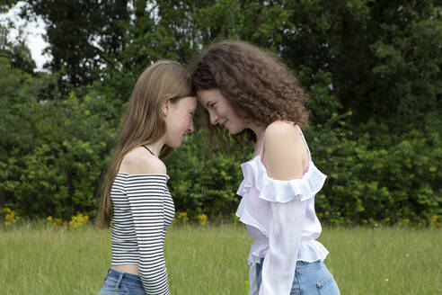 Two best friends standing head to head on a meadow - PSTF00502