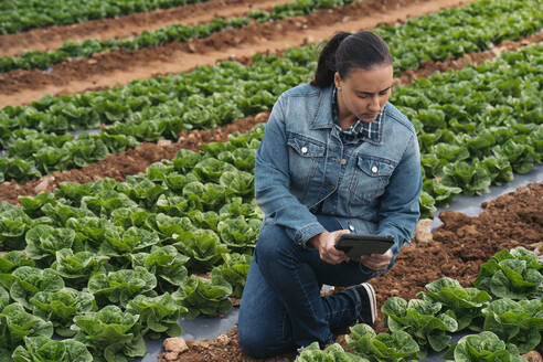 Woman with tablet in lettuce field - MPPF00379