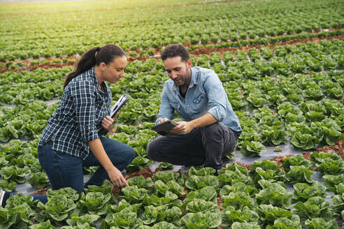 Man and woman with tablet and clipboard in lettuce field - MPPF00382
