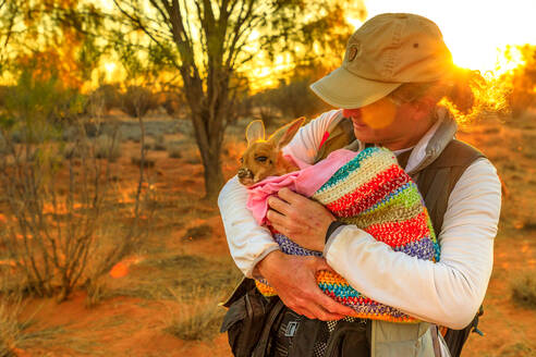 Tourist man holding orphaned baby kangaroo at sunset in Australian Outback, Red Center, Northern Territory, Australia, Pacific - RHPLF13209