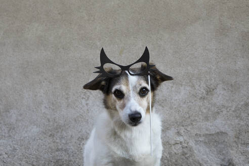 Portrait of mongrel with comedy glasses - PSTF00582