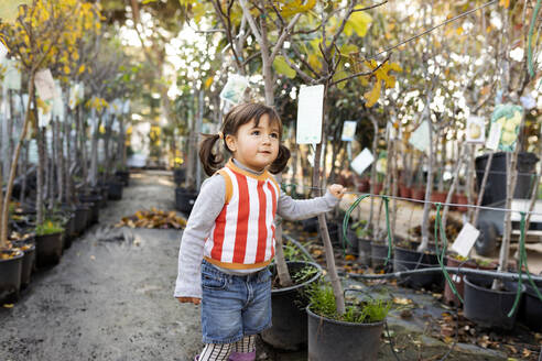 Portrait of little girl exploring potted trees in plant nursery - VABF02473