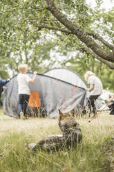 Dog looking at children while resting on grass at campsite - MASF15658