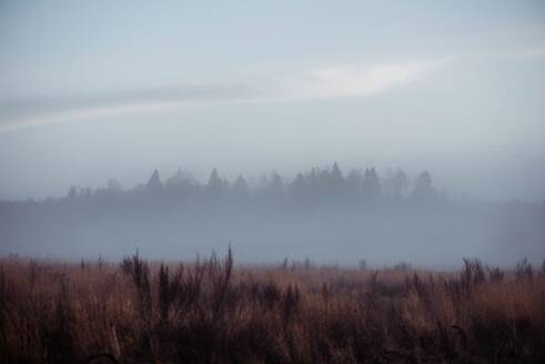 Meadow and forest covered in frost and fog at sunset in winter - CAVF71964