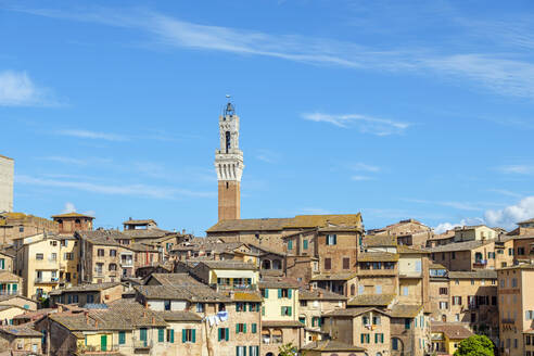 Torre del Mangia and buildings in old town, Siena, Tuscany, Italy - CAVF72186