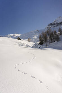 Animal footprints in fresh snow, Valmalenco, Italy - MRAF00468