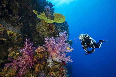 Palau, Ulong Channel, Diver exploring soft coral reef - GNF01506