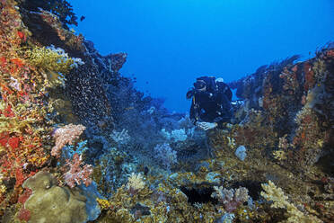 Palau, Koror, Diver exploring ship wreck overgrown with coral reef - GNF01518