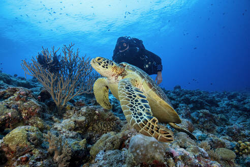 Palau, Blue Corner, Diver and sea turtle underwater - GNF01530