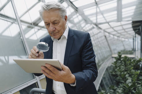 Senior businessman with magnifying glass reading tablet in office - JOSF04218