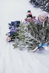 Three children having fun with fir tree on sledge, Jochberg, Austria - PSIF00348