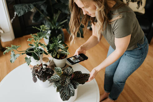 Woman taking photo of house plants with mobile phone - ISF23674