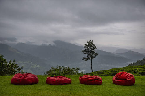 Red cushions in the highlands of Sri Lanka - CAVF73205