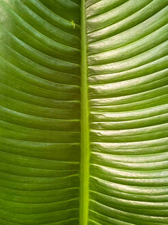 Green tropical plants in jungle garden close up of leaves - CAVF73521