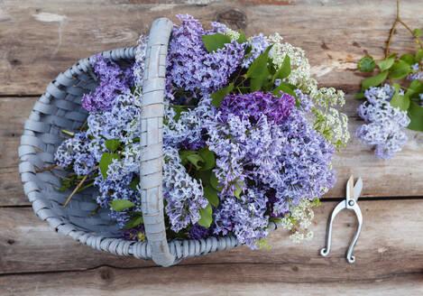 Lilac flowers in basket - JOHF05245