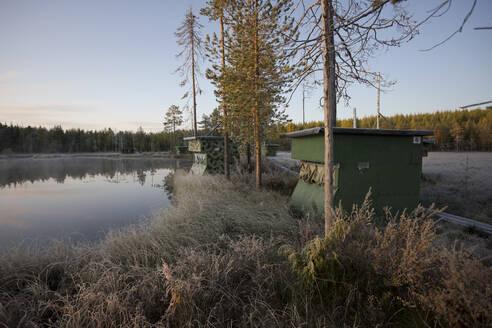 Finland, Kainuu, Kuhmo, Grassy lakeshore at autumn dawn - ZCF00901