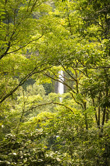 Costa Rica, Alajuela Province, La Fortuna, Trees of green lush rainforest with waterfall in background - TEBF00023