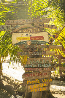 Costa Rica, Puntarenas Province, Montezuma, Palm tree covered in various directional signs - TEBF00032