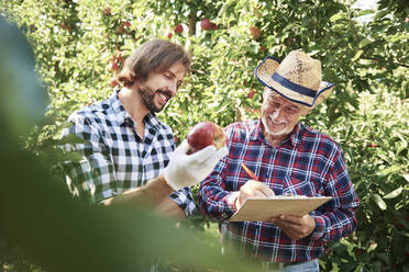 Fruit growers checking quality of apples in their orchard - ABIF01257