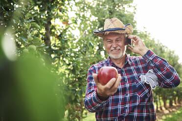 Proud fruit grower holding apple, talking on he phone - ABIF01266