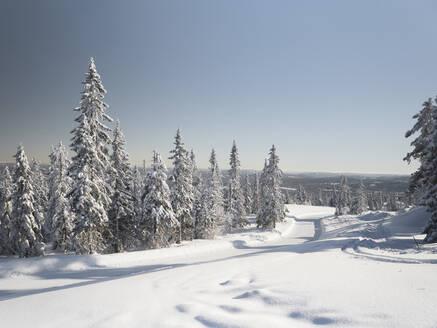 Winter landscape - JOHF05908
